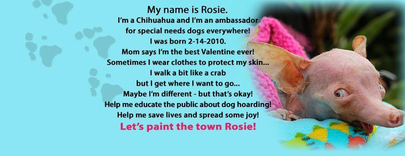 everything rosie banner 2013