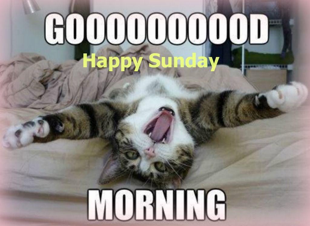 Happy Sunday Funny Good Morning Memes Good Morning Meme Morning Memes