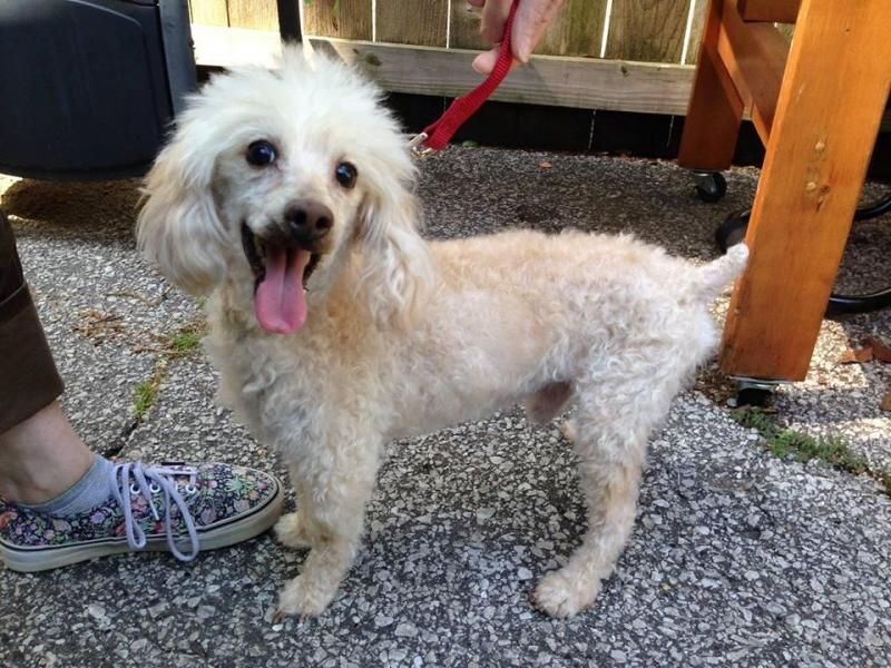 Adopt Augie On Pet Care Dogs Maltese Mix