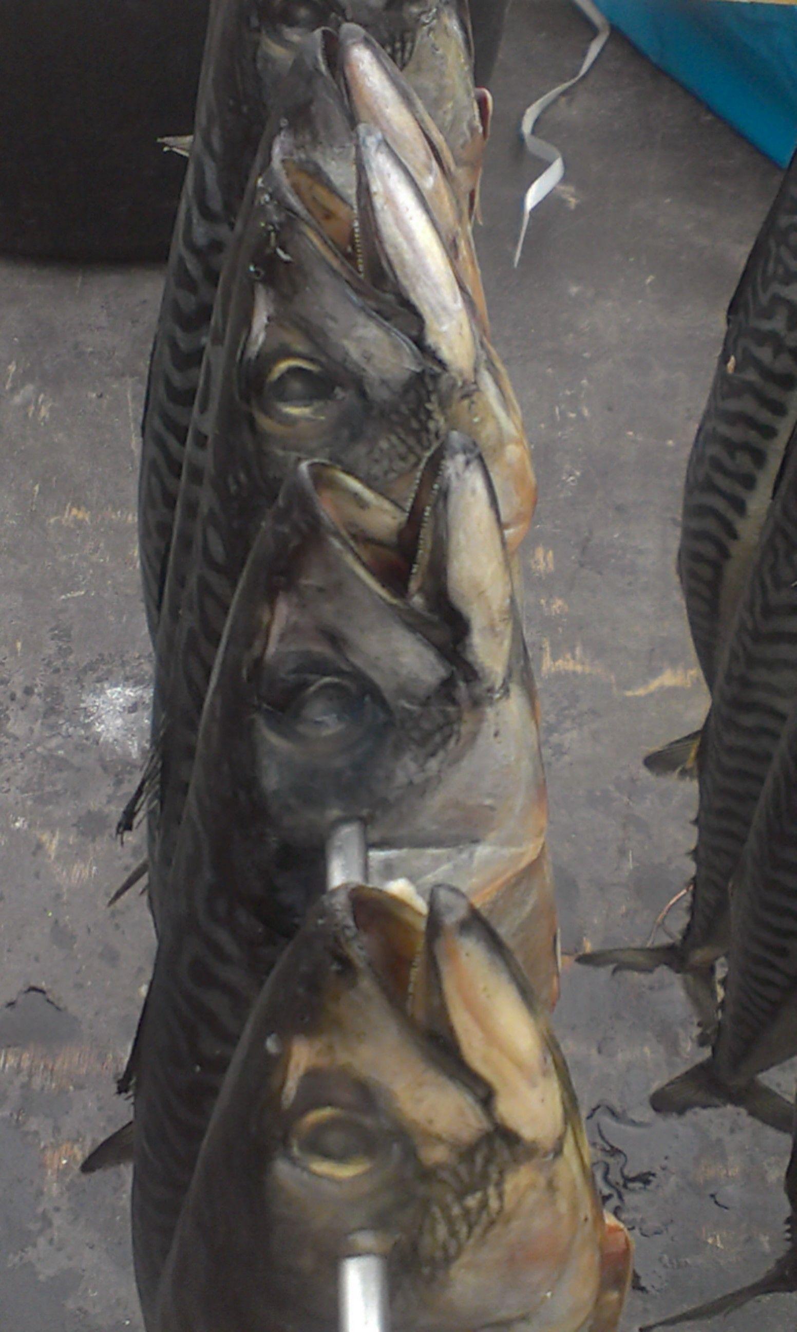 Havenfestival 2013: vers gerookte makreel