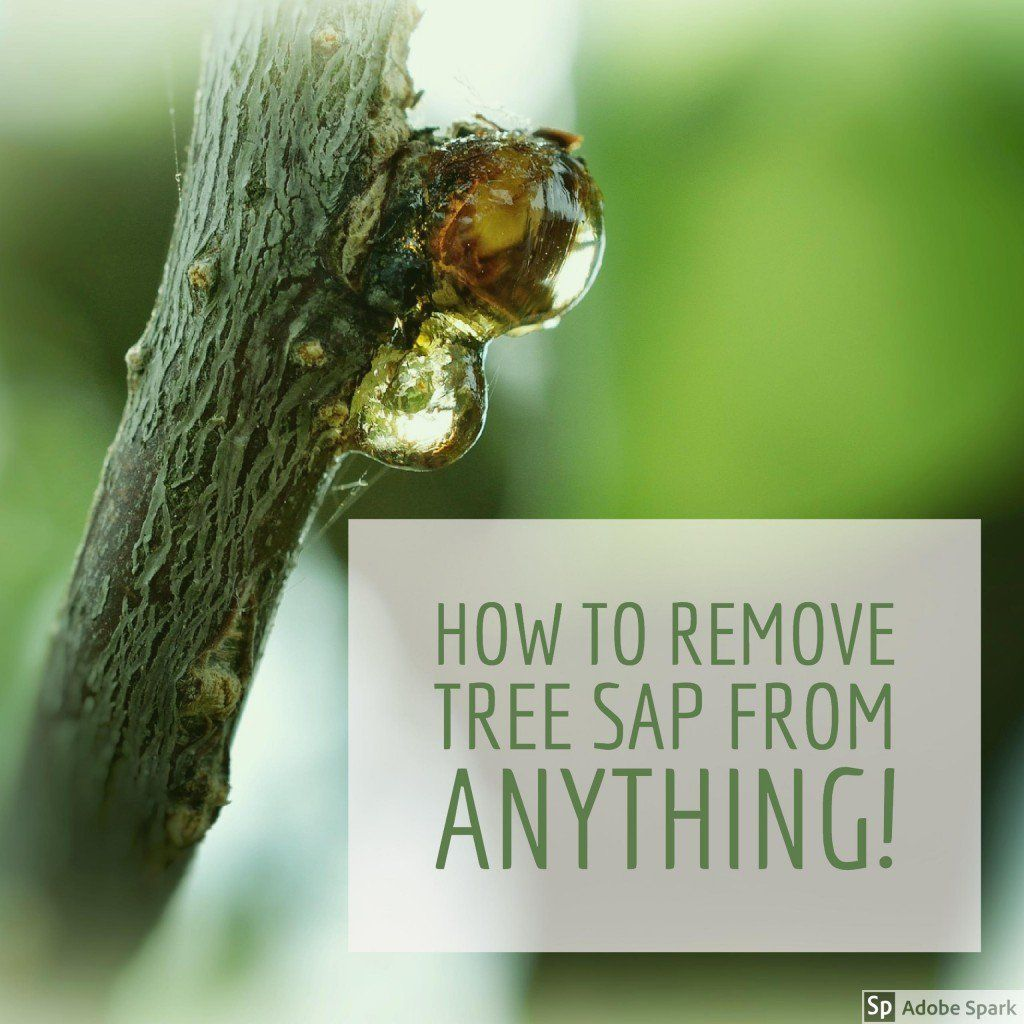 How To Get Pine Sap Off Of Car Paint