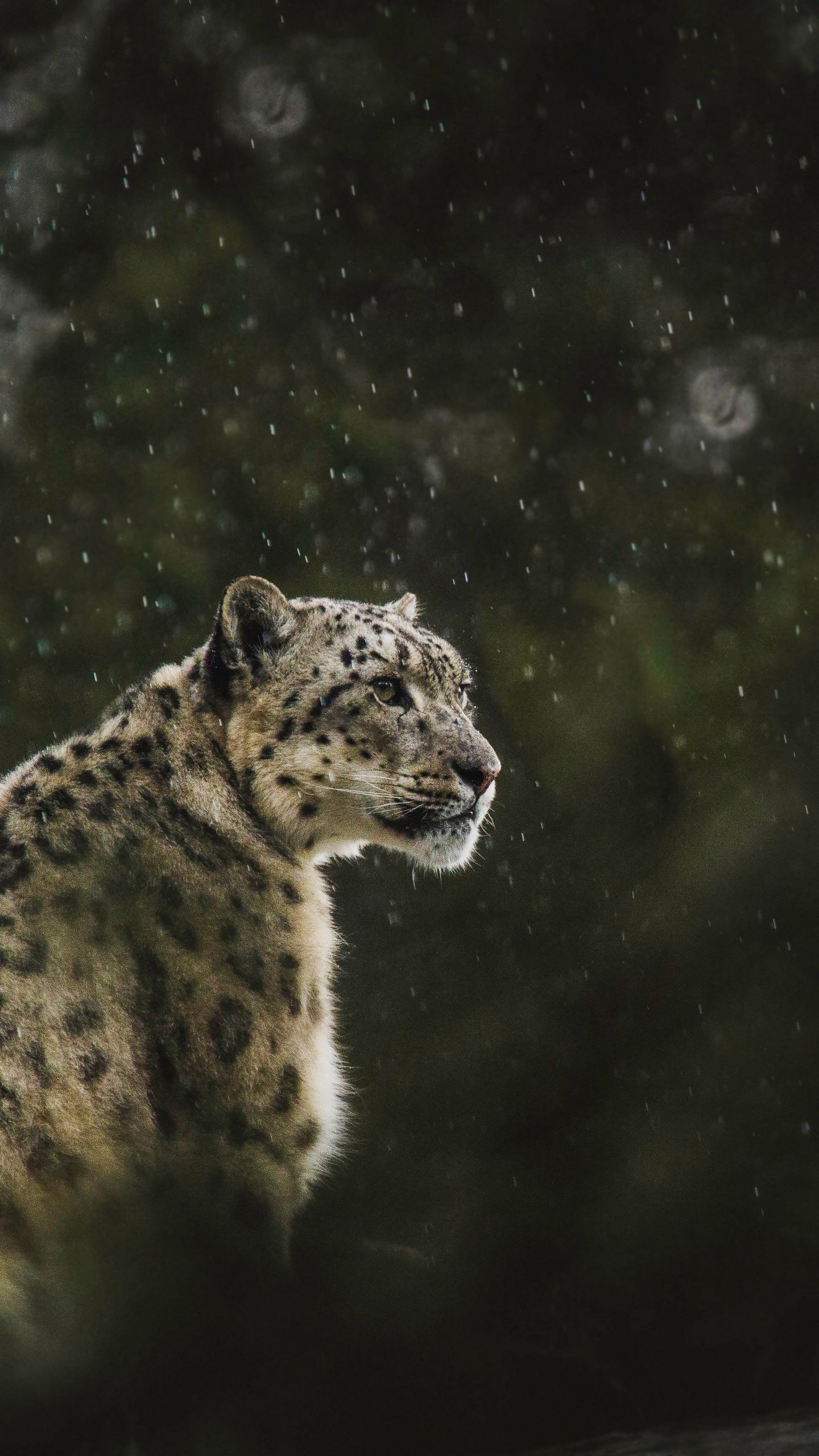 See My Collection Of Cool Iphone And Android Snow Wallpapers And Background Images In High Definition Get Instant Acc In 2020 Leopard Predator Samsung Galaxy S4 Mini