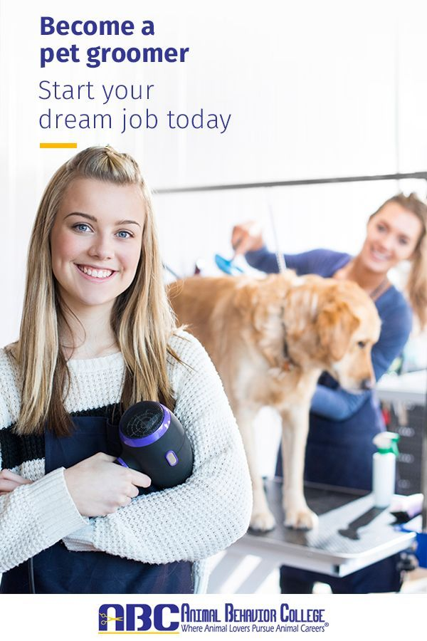 Wondering How To Become A Dog Groomer Animal Behavior College S Doggrooming Program Utilizes A Proven System Of Hands On Training With An On Dog Training School
