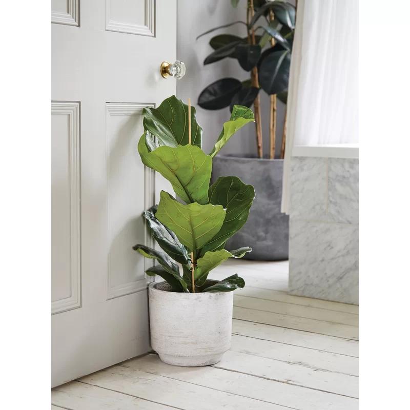 Dexheart Concrete Plant Pot In 2020 Concrete Plant Pots Plants