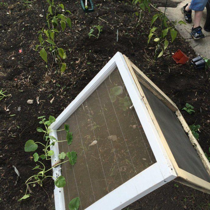DIY upcycled A-frame trellis and a tiny urban'ish garden