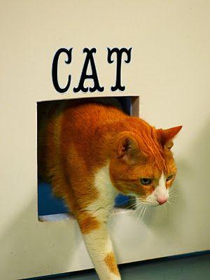 Cat Hole! Door