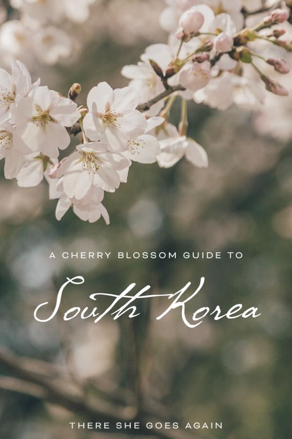 Cherry Blossoms Korea 2020 A Forecast Guide Where To Go South Korea Travel Seoul Korea Travel Cherry Blossom