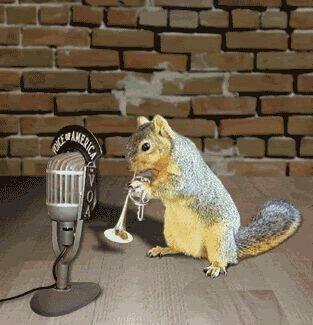 Jazz Squirrel  | Squirrels | Squirrel, Gif photo, Gif pictures