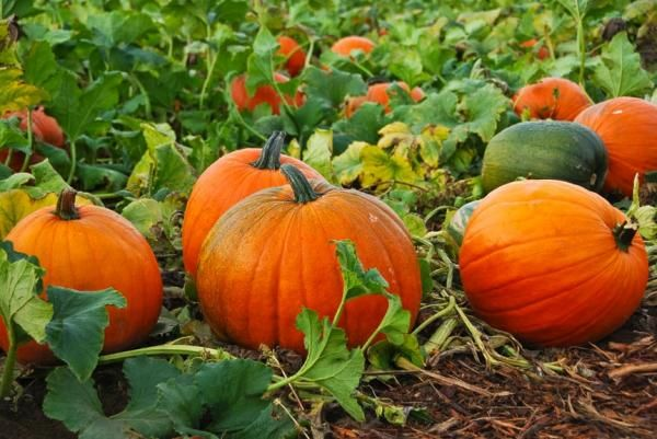 Eating With the Seasons: Nutritious Foods for Autumn
