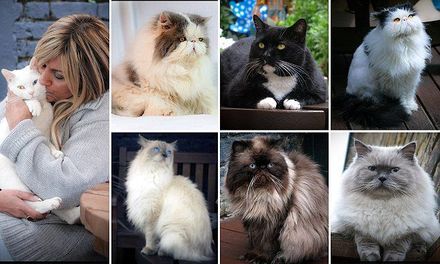 Cats Have Modelling Deal And Calendar Offer Thanks To Facebook Fame Cats Animals Friendship Cats And Kittens