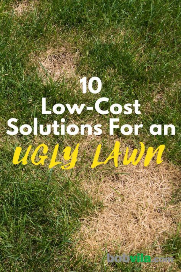 Getting A Great Green Lawn Doesn T Need To Cost As Much As You Might Think Check Out These Affordable Landscaping Prod In 2020 Weeds In Lawn Grass Care Lawn Care Tips