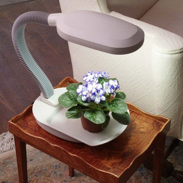 Fancy - Desk Top Plant Light | Plant lighting, Best led ...