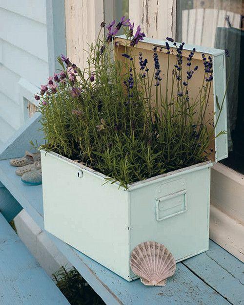 teeny tiny gardening interview lavande sous toutes les. Black Bedroom Furniture Sets. Home Design Ideas