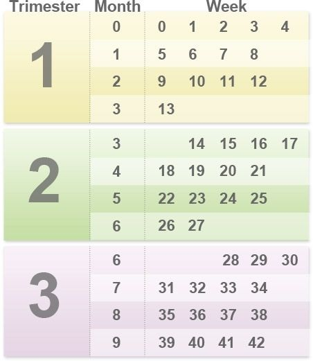 How Pregnant Am I Pregnancy By Weeks Months And Trimesters Babycenter