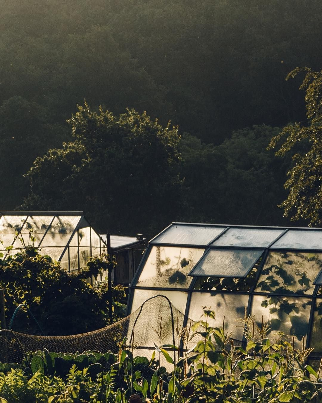 morning sunlit greenhouses via haarkon east of eden pinterest