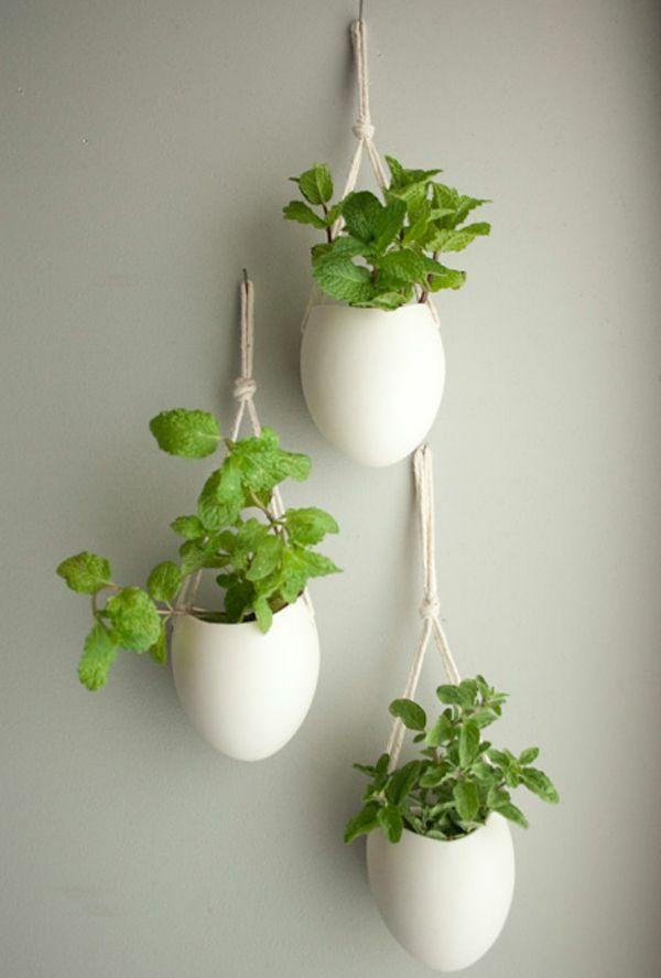 hängende zimmerpflanzen – bilder von anreizenden blumenampeln, Hause und garten