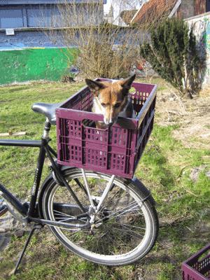 Rear Bike Basket Dog Carrier Dog Bike Basket Biking With Dog