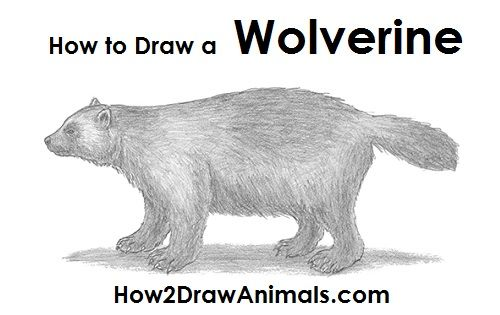 How To Draw A Wolverine Drawings