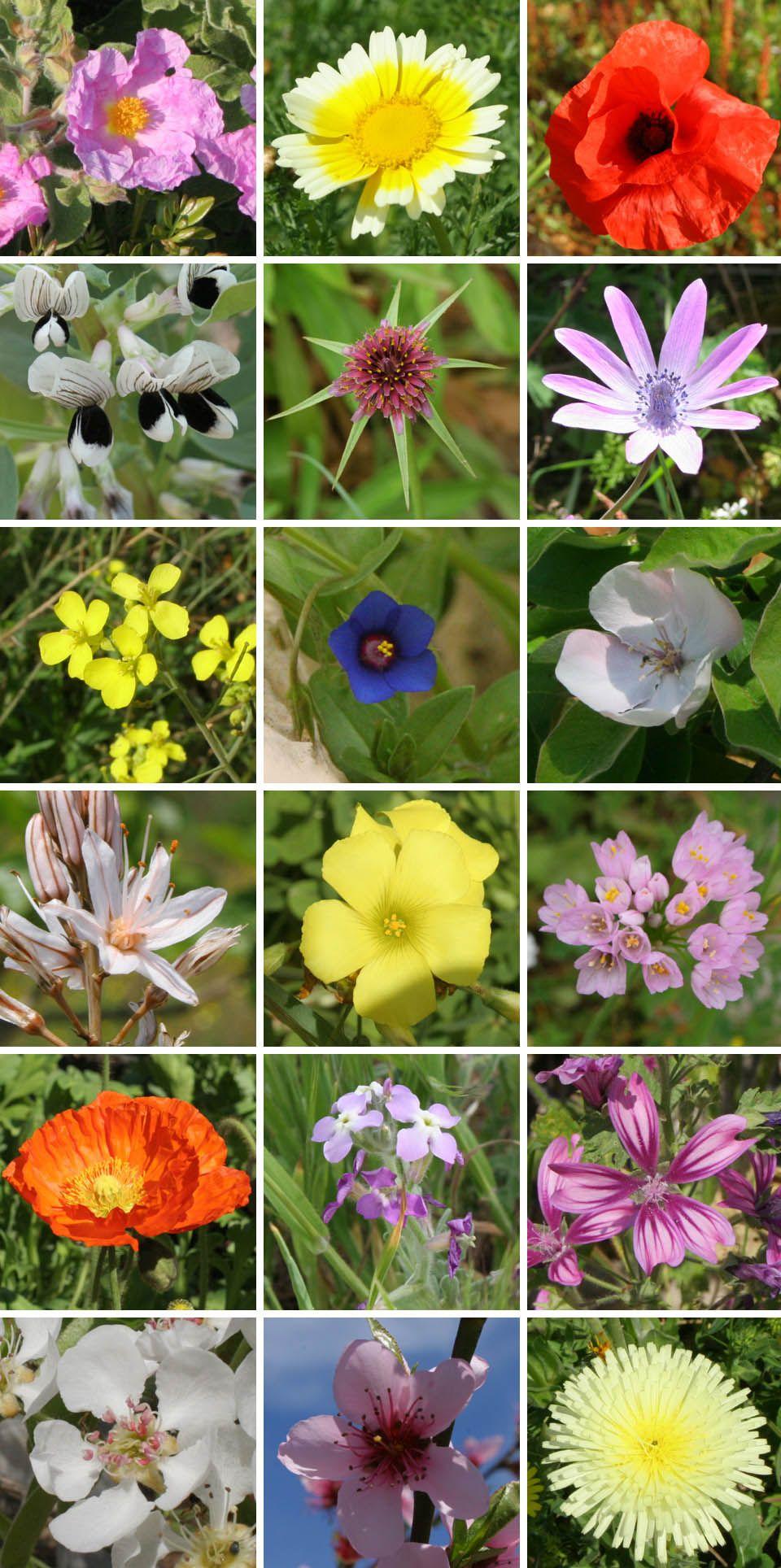 Flowers In Italy Italyanca Italian