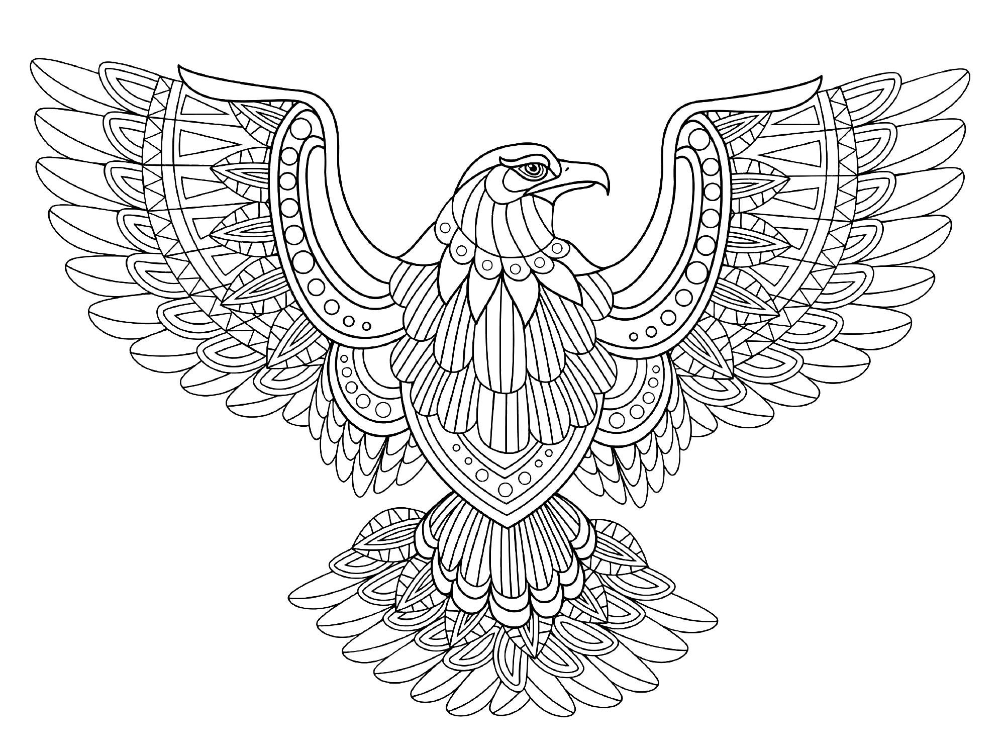 Flying Eagle Birds Coloring Pages For Adults Just Color Bird