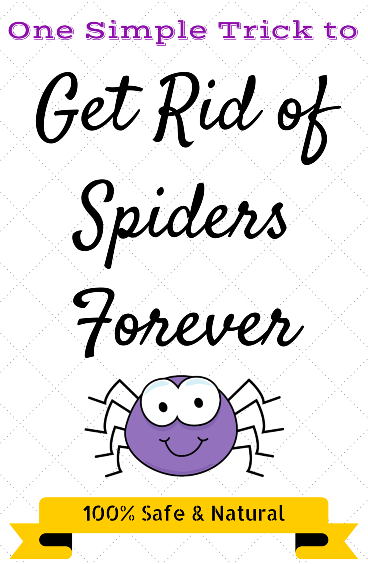 how to get rid of spiders spider spray spider and sprays