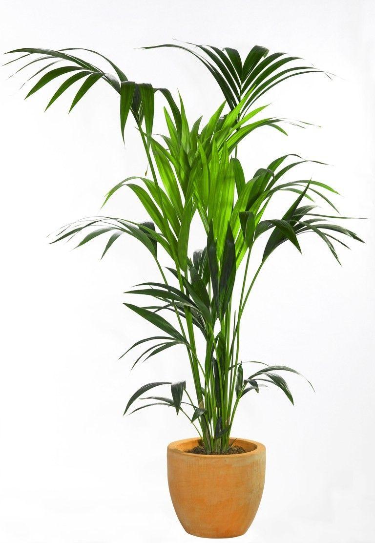 Home decor plants ideas   Inspiring Decor Ideas With House Plants homedecor