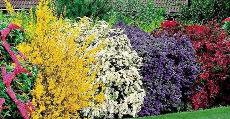 5 arbustos coloridos para realzar nuestro jard n garden for Planta arbustos para jardineras