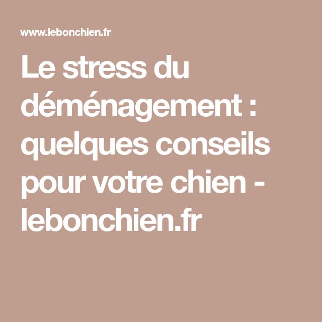 Le stress du déménagement : quelques conseils pour votre chien - lebonchien.fr