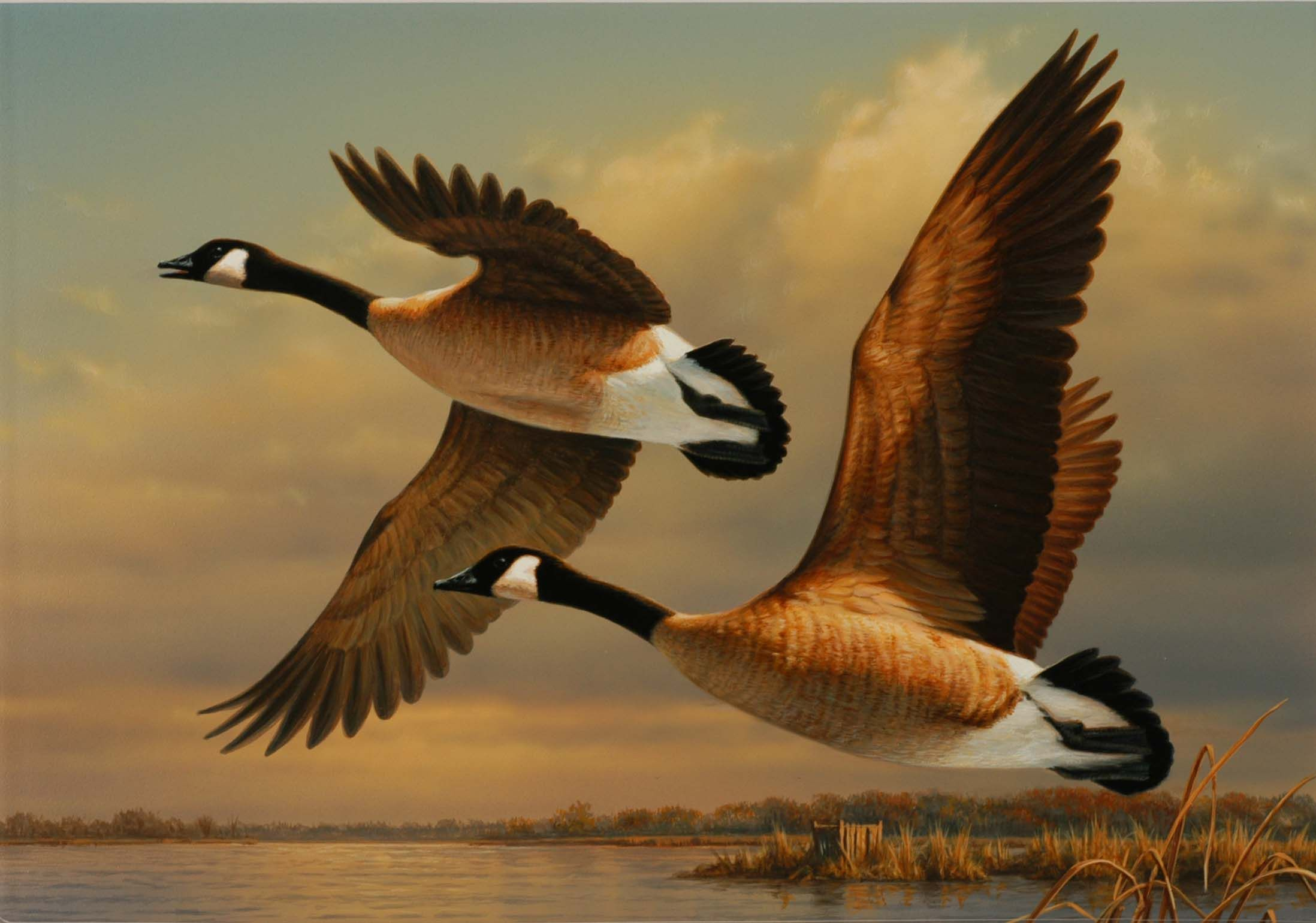 Geese in flight 2196x1540 (With images) Waterfowl art