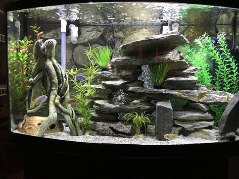fishtanks  Fresh water fish tank, Fish tank decorations, Cool
