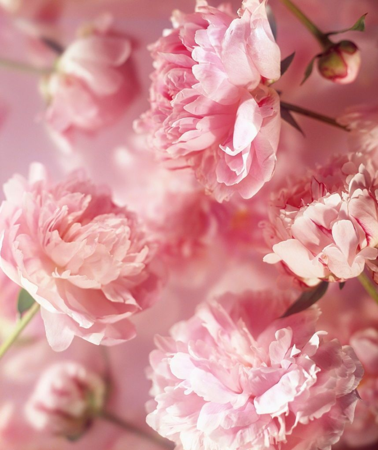 Wedding Flowers Meaning: 9 Summer Flowers And Their Secret Meanings