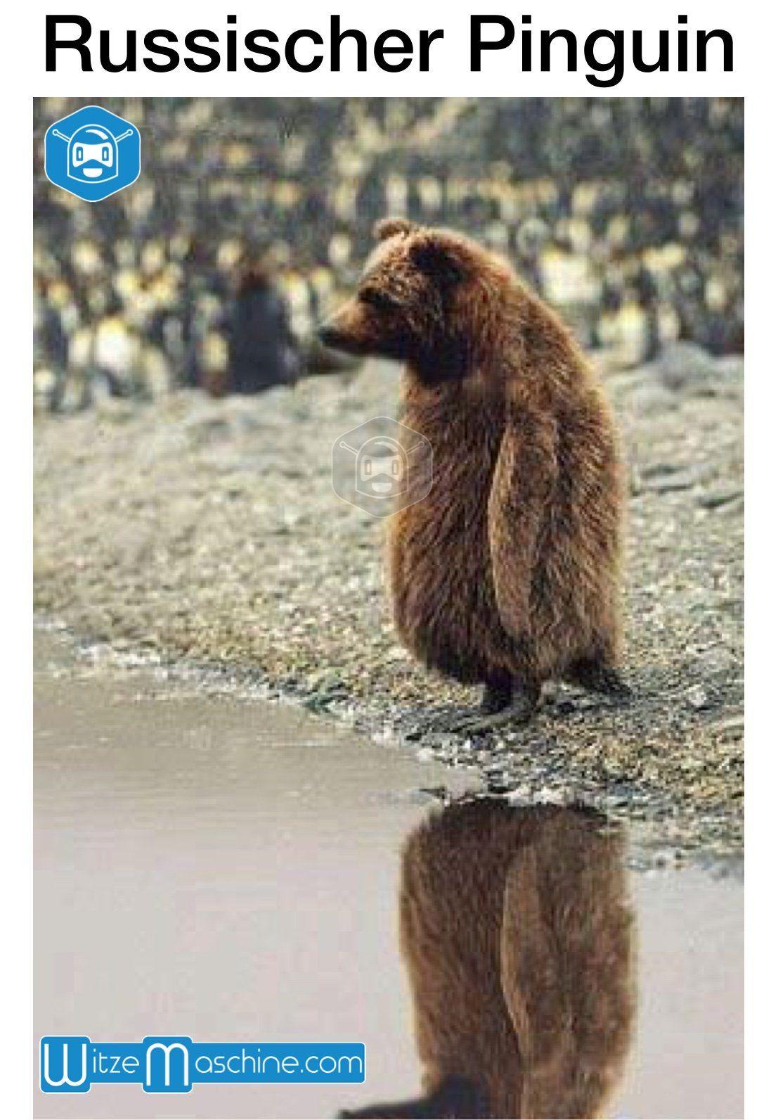 Russischer Pinguin Bär Russenwitze Funny Russian Fail