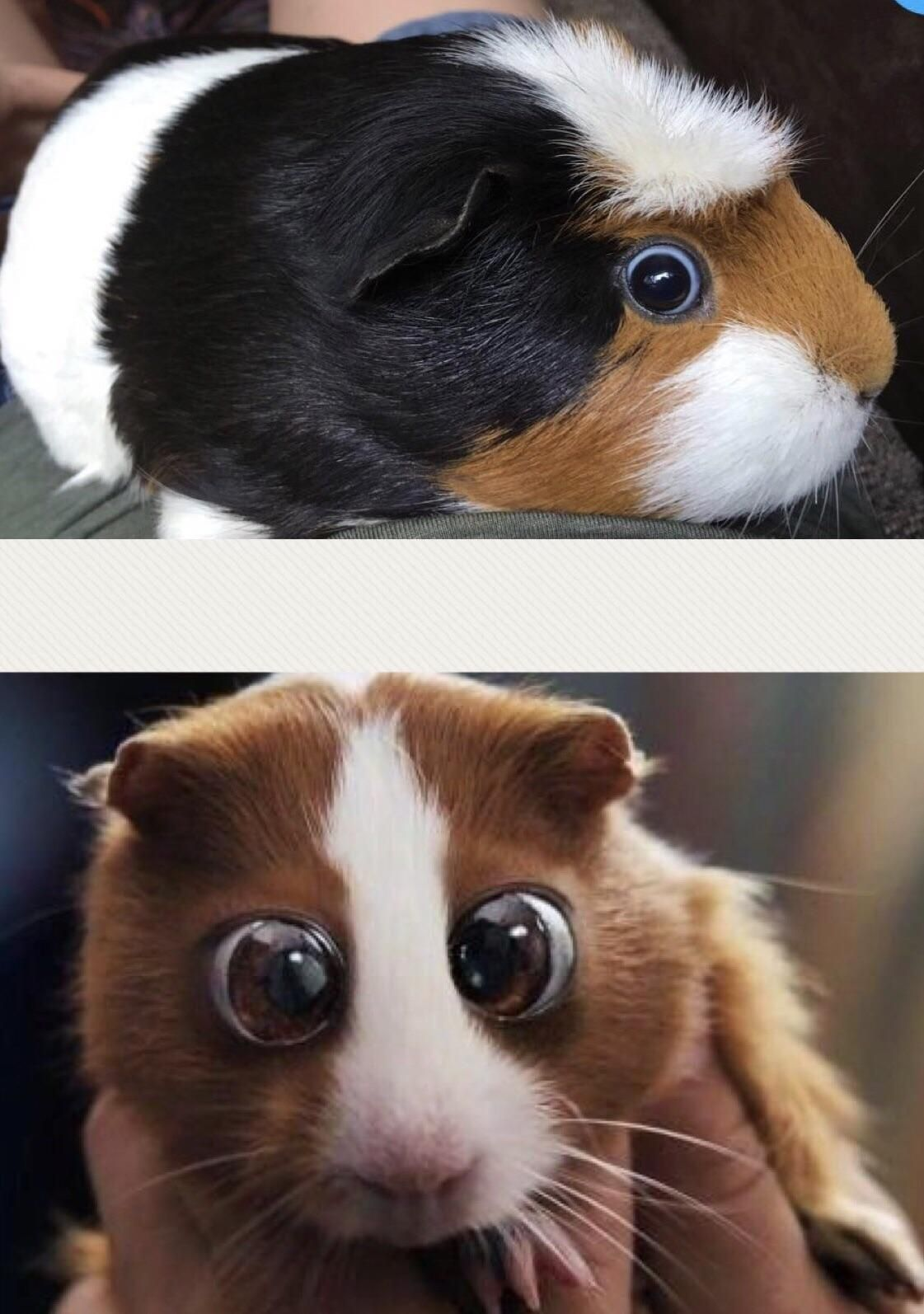 Pin On Adorable Pets