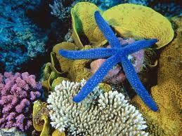 Resultado de imagen para corales marinos