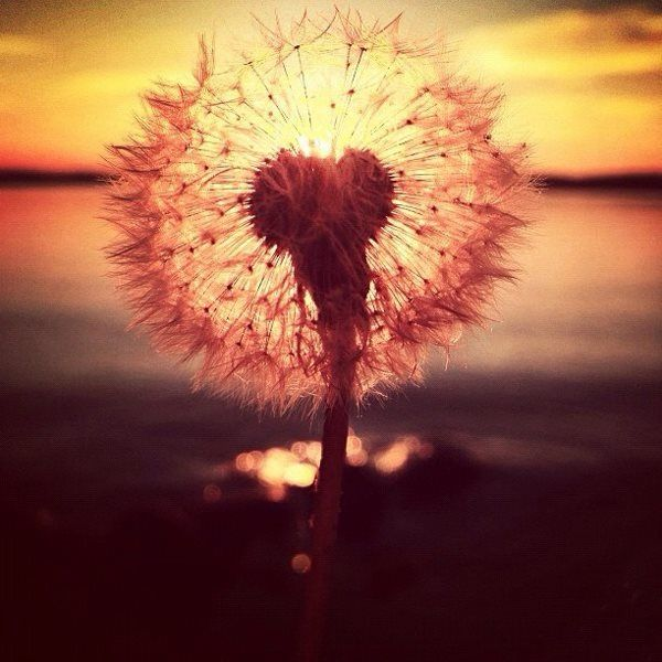Make a wish and let your heart guide in manifesting it.