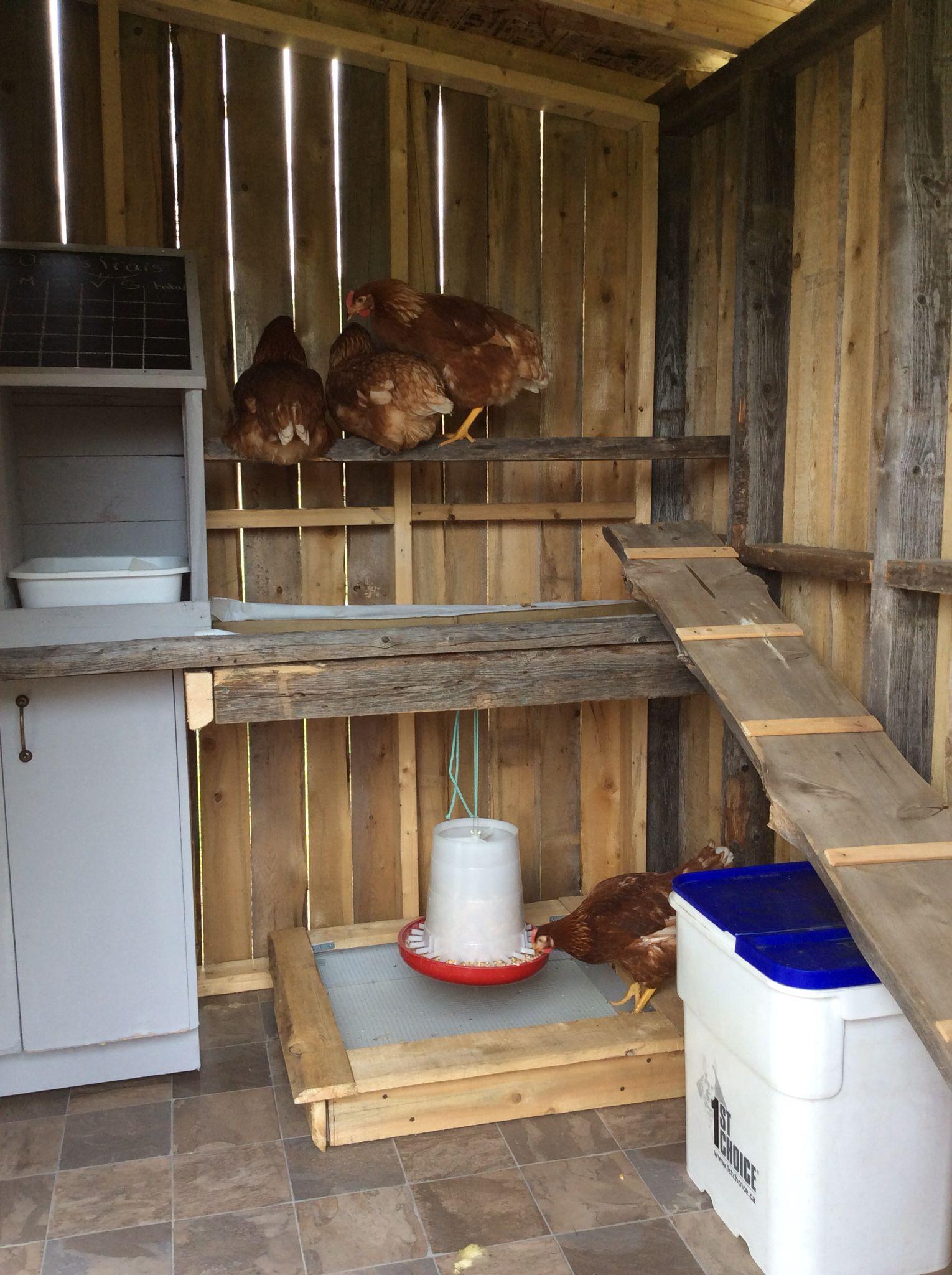L'arrivée de nos poules.  Mangeoire installée sous le perchoir et au-dessus d'un bac de récupération.