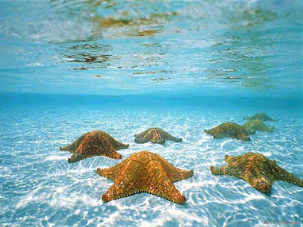 Underwater iphone wallpaper tumblr - Tumblr Backgrounds Underwater