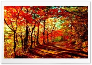 Autumn Forest Hd Wide Wallpaper For Widescreen In 2020 Autumn Forest Forest Wallpaper Misty Forest