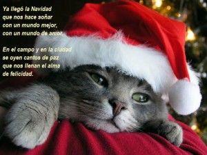 Poemas Cortos Para Niños Sobre La Navidad 4 Navidad Gatos