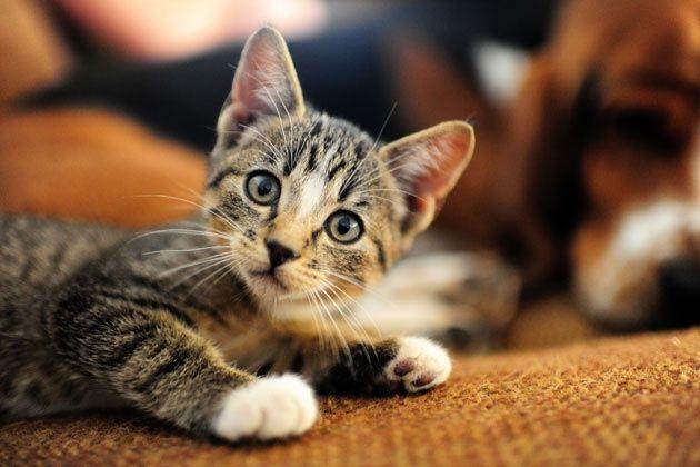 One Of My Favorite Charlie/kittenkitten Moments.