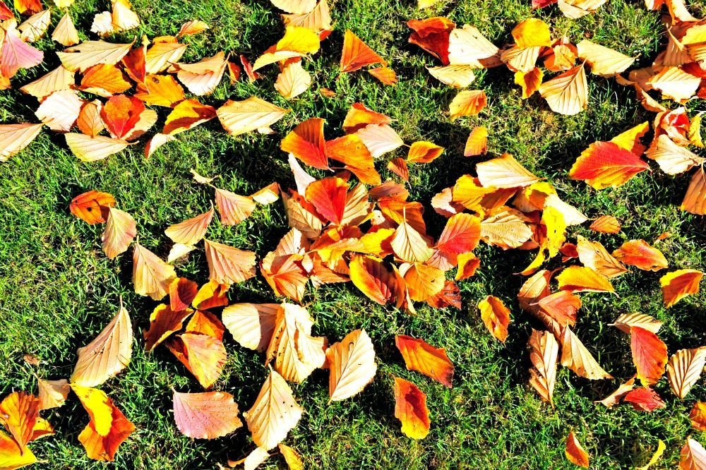 No leaf blower necessary! Use a good sized sturdy cardboard and push where you want them.