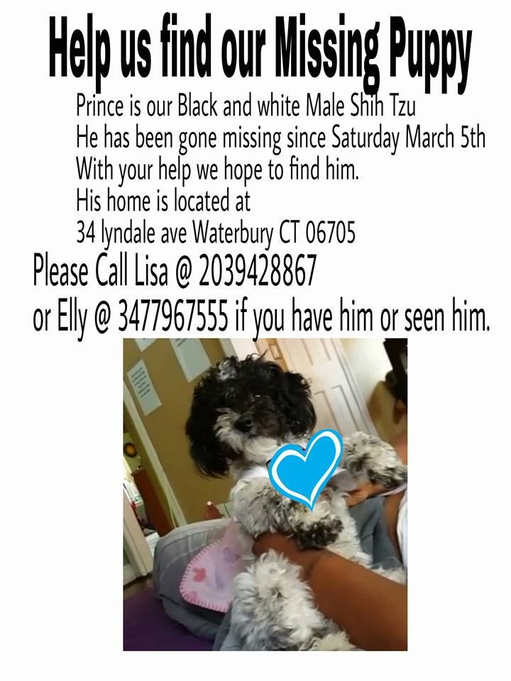 Caress Dingle Ct Lost Pets Follow March 8 Near Waterbury