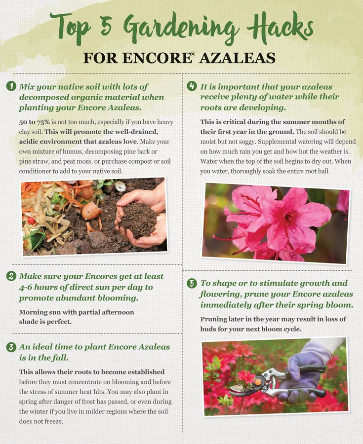 Top 5 Gardening Tips For Encore Azaleas Azaleas Care Azaleas Gardening Tips
