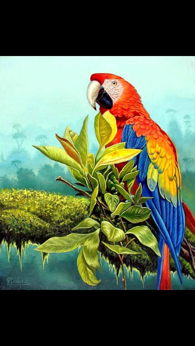 Pin By Geovanny Cordero On Arte Parrots Art Birds Painting Bird Art