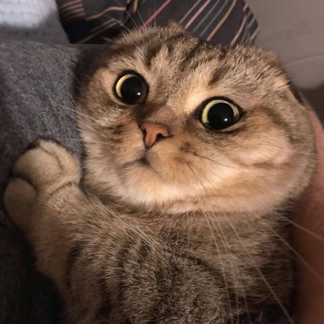 Pin By Hannah Krejci On Animals In 2021 Beautiful Cats Cute Cats Cute Cats Photos