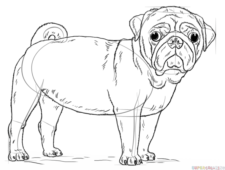 How To Draw A Pug Dog Step By Step Drawing Tutorials For Kids And Beginners Puppy Coloring Pages Dog Coloring Page Dog Drawing Tutorial