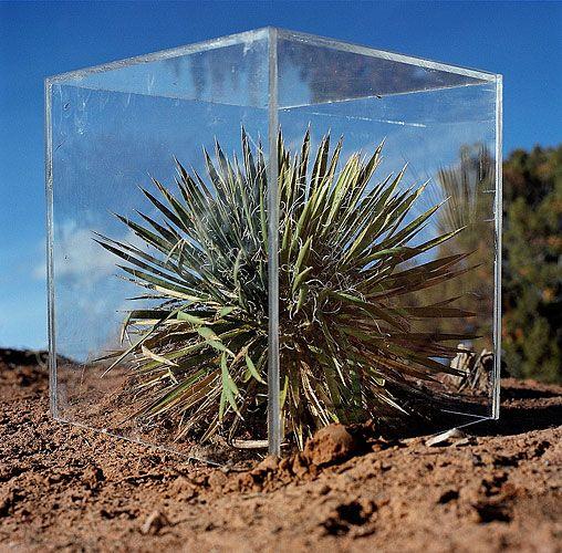 Anne-Katrin Spiess - Yucca Plant Utah 2000