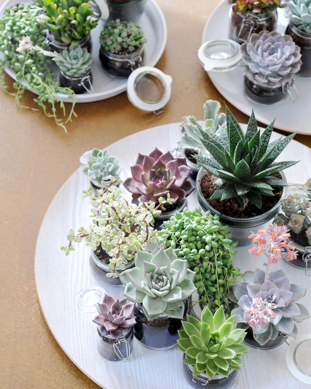 Zimmerpflanzen in szene setzen coole einrichtung garten pflanzen und sukkulenten - Tolle zimmerpflanzen ...