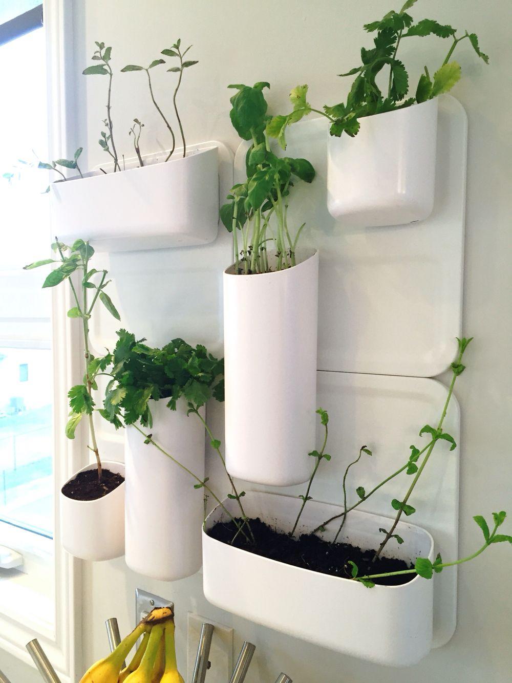 perchurbio herb garden | diy home decor | pinterest | herbs