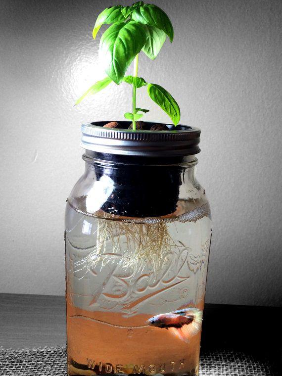 Mason Jar Aquaponics Organic Kit Start your new by ...